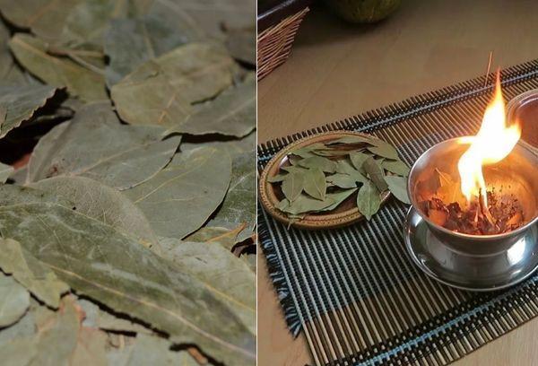 Лавровые листья сушеные