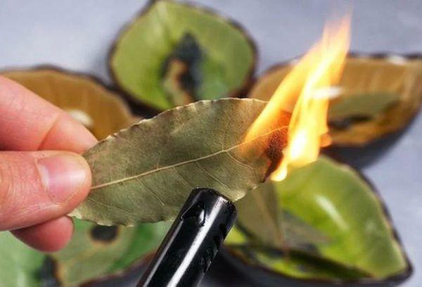 Поджигание лавровых листьев