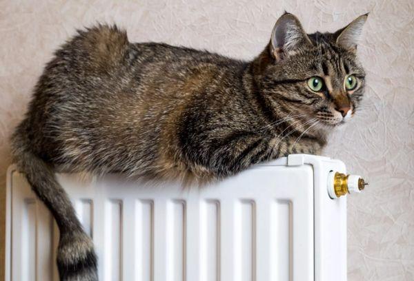 Кошка на батарее