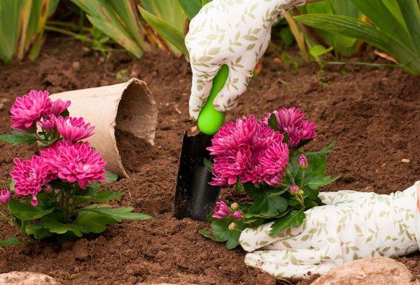 Высадка цветов в грунт