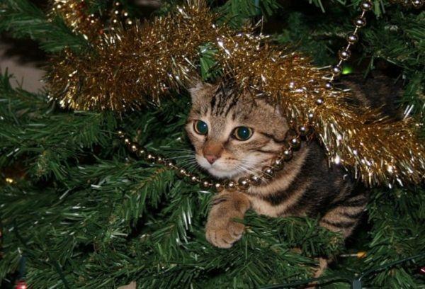 Кошка в елке