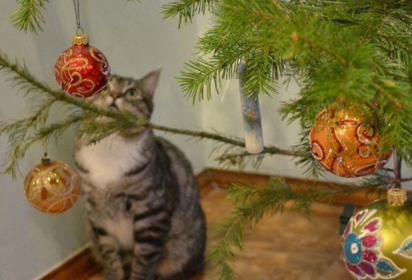 Кот у елки