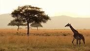 Картины по номерам - Африка