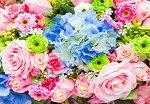 Картины по номерам — цветы