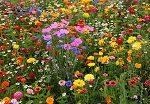 Картины по номерам — полевые цветы