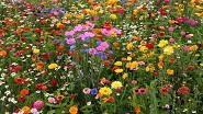 Картины по номерам - полевые цветы