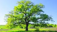 Картины по номерам - деревья