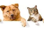Картины по номерам — домашние животные