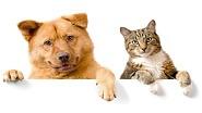 Картины по номерам - домашние животные