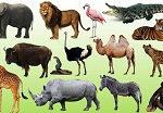 Картины по номерам — животные