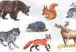 Картины по номерам — дикие животные