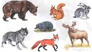 Картины по номерам - дикие животные