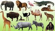 Картины по номерам - животные