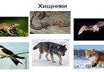 Картины по номерам — хищные животные