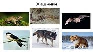 Картины по номерам - хищные животные