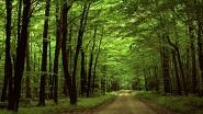 Картины по номерам - лес