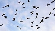 Картины по номерам - птицы