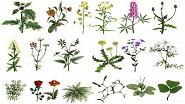 Картины по номерам - растения