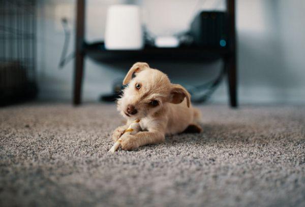 Щенок на ковре