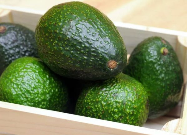 Созревший авокадо