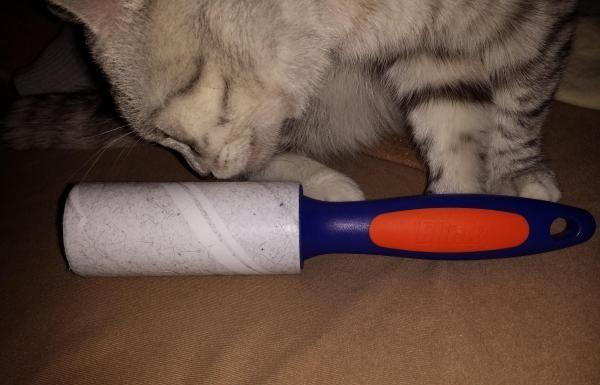 Липкий ролик для кота