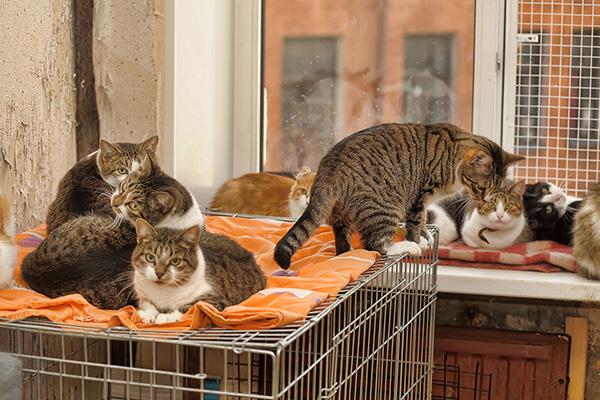 Много кошек в квартире
