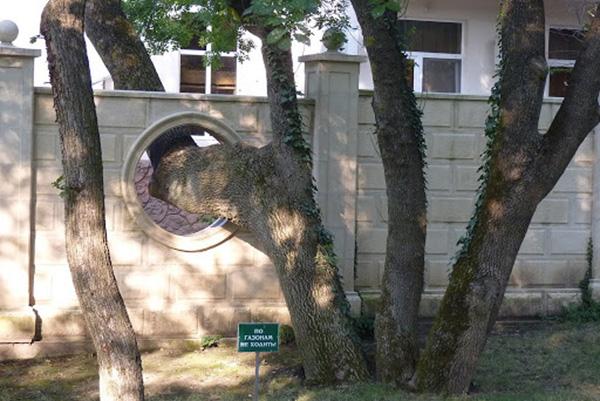 Дерево на меже