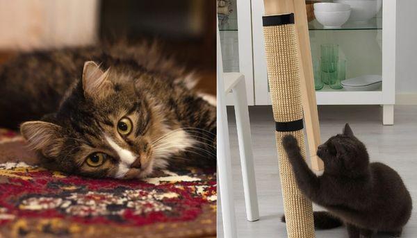 Подстилка и когтеточка для кошек