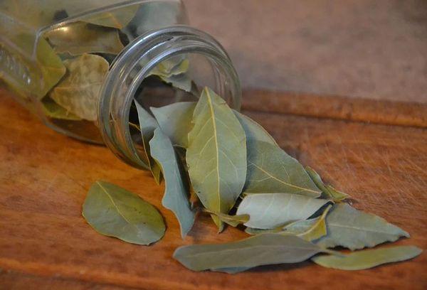 Листья лавра в банке